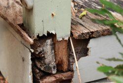 ASNU_Carpentry_Deck_Repairs_Before3 sm